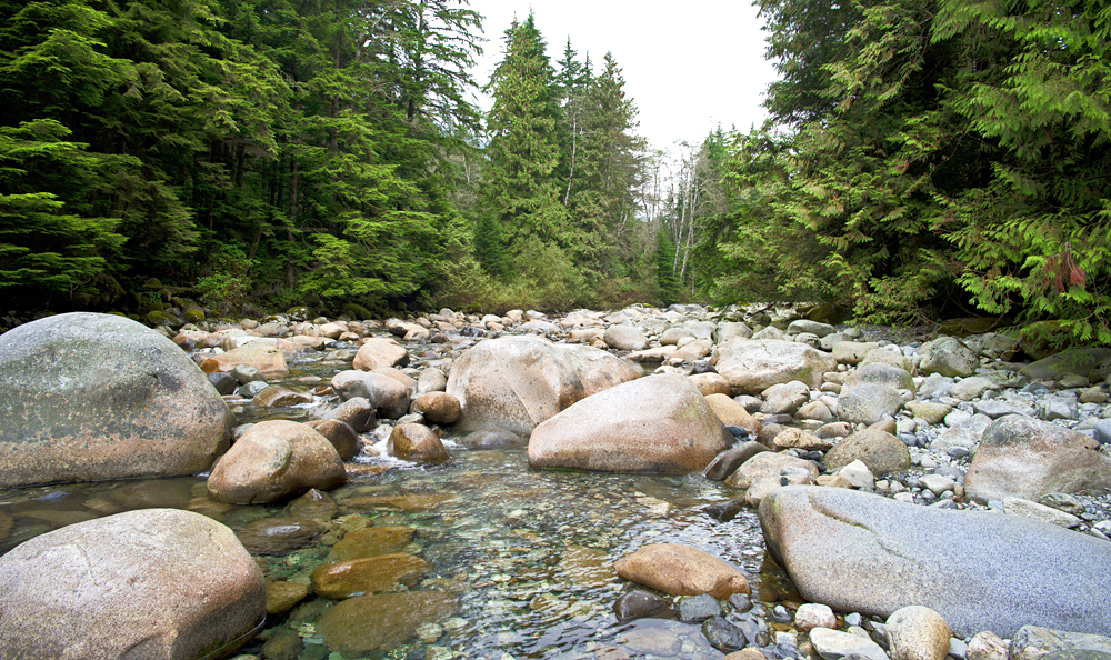 Capilano River - stony river with forest scene